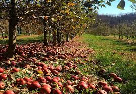 pittsburgh u0027s best places for apple picking this fall