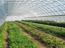 15 most popular vegetables and fruits to grow in a green house