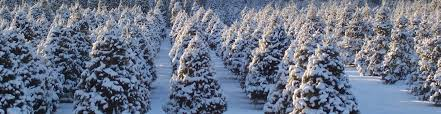 traditions around the world mr christmastree