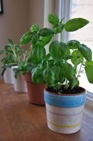 نباتات للتزيين الشرفة images?q=tbn:ANd9GcQ