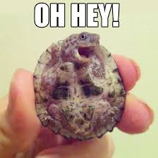 Laughing Baby Meme - adorable baby turtle that can cheer anybody up aww