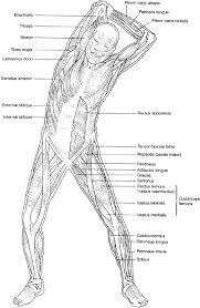 Anatomy And Physiology Coloring Workbook Chapter 16 Answer Key Anatomy Coloring Pages Bestofcoloring Com
