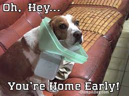 Oh You Dog Meme - oh hey you re home early dog with stuck trash lid dump a day