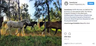 5 Swoon Worthy Instagram Accounts To Follow Finalsite Blog