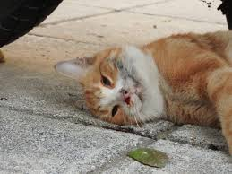 stray cats in distress u2013 why we tnr theorphanpet