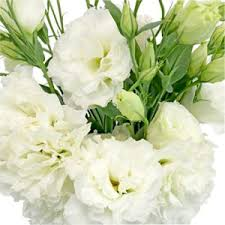flowers express unthinkable white lisianthus flowers express delivery interesting