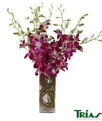 halloween flowers gifts miami florist u0026 flower delivery trias flowers u0026 gifts
