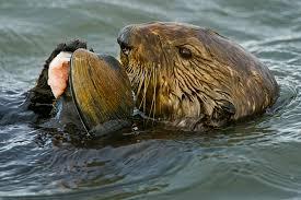 new diseases toxins harming marine life