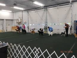 american eskimo dog breeders new york finger lakes american eskimo dog assoc show pictures home