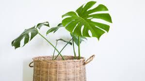 plante d駱olluante chambre 10 plantes d intérieur dépolluantes femmes d aujourd hui