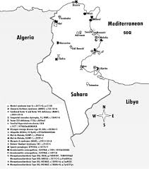 founder mutations in tunisia implications for diagnosis in north