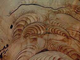 tree cross section table tree ring gallery 2