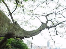 branch by marcwashere on deviantart