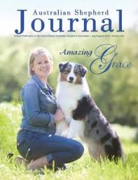 australian shepherd kennel club usasa home page usasa
