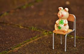 free images grass plant play sweet chair animal cute