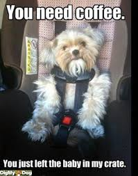 Dog In Car Meme - oh my gosh so funny i haven t done this yet but i did put