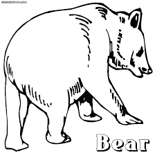 bear coloring pages coloring pages download print