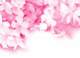 pink flower photo collection pretty pink flower backgrounds
