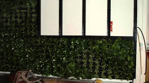 how to install an interior green wall into an office youtube