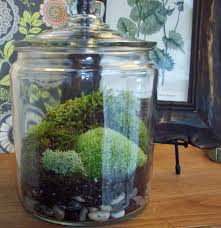 baby nursery magnificent large apothecary jar terrarium