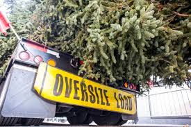 2017 rockefeller center christmas tree has arrived in nyc photos