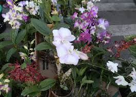orchids for sale growing orchids online course careerline courses