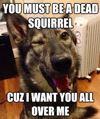Dead Squirrel Meme - you must be a dead squirrel cuz i want you all over me pickup