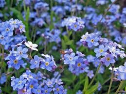 best perennial flowers for your garden