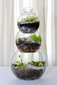image result for coffee pot terrarium for a venus fly trap in