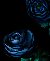 wallpaper biru hijau gambar hitam dan putih menanam daun bunga hijau kegelapan