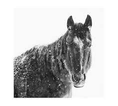 snowy black horse framed print jennifer meyers pottery barn