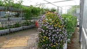 greenhouse for vegetable garden vertical garden tube