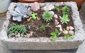 Small Rocks For Garden Plant A Miniature Rock Garden Gardening In A Hypertufa