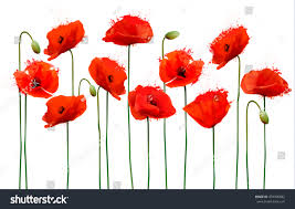 poppies flowers abstract background poppies flowers vector stock vector