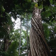 are cities ecosystems u2014analogous to natural ones u2014of nature