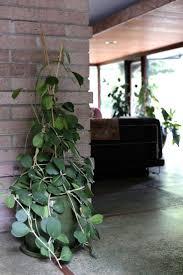 Inside Home Plants by 392 Best Indoor Garden Images On Pinterest Plants Indoor Plants