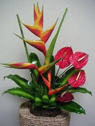tropical flower arrangements basic floral design ideas to consider when using tropical flowers