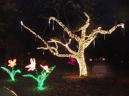 Botanical Gardens Christmas Lights by Lights In Bloom At Marie Selby Botanical Gardens