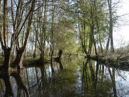 balades chambres d hotes balade en barque dans le marais poitevin photo de chambres d hôtes
