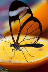 43 best orange images on pinterest orange crush photography and