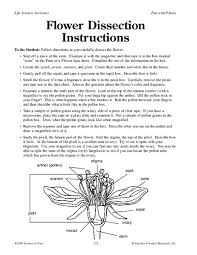 flower dissection worksheet free worksheets library download and