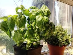 best indoor herb garden design ideas u2014 emerson design simple