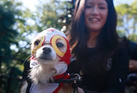 matching dog and owner halloween costumes 7 cute easy couples u0027 costumes for you and your dog so you can