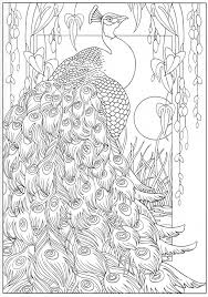 peacock coloring page 16 31 color pages stencils templates