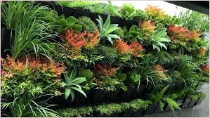 plants that need low light outdoor plants that need little light low light outdoor plants
