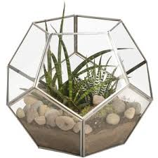 glass terrariums shop for glass terrariums on polyvore