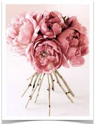 bulk peonies 29 best bedroom ideas for us images on
