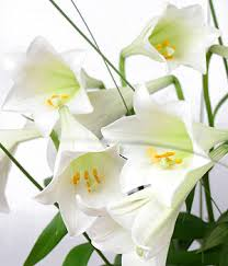 flowers for funeral services funeral flowers dilemmas tranquility funeral services