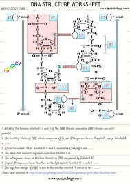 dna structure worksheet test how much you know about dna