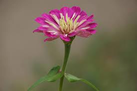 free images nature blossom petal park botany closeup flora